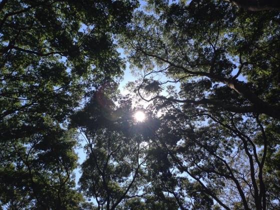 Bosque dos Constituintes, Brasília - DF. Foto Ana Maria de Souza